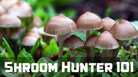 ShroomHunter 101: Identify Wild Magic Mushrooms (Psilocybin)